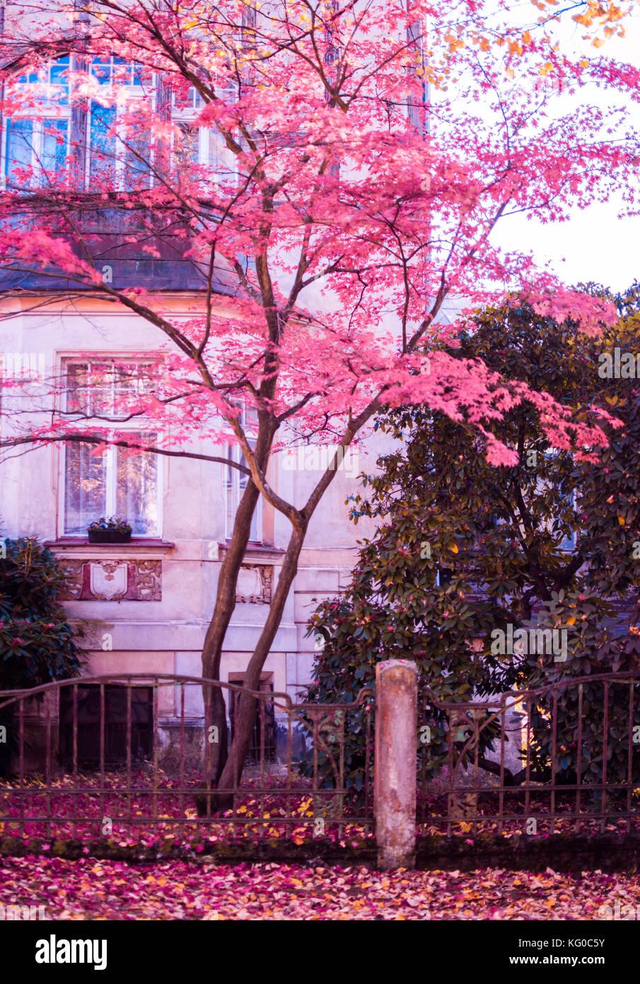 Pinky tree - Stock Image