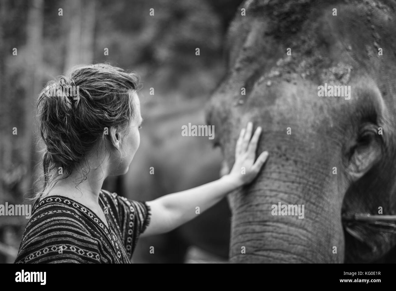 500px Photo ID: 138124397 - Shot in an elephant preservation camp in