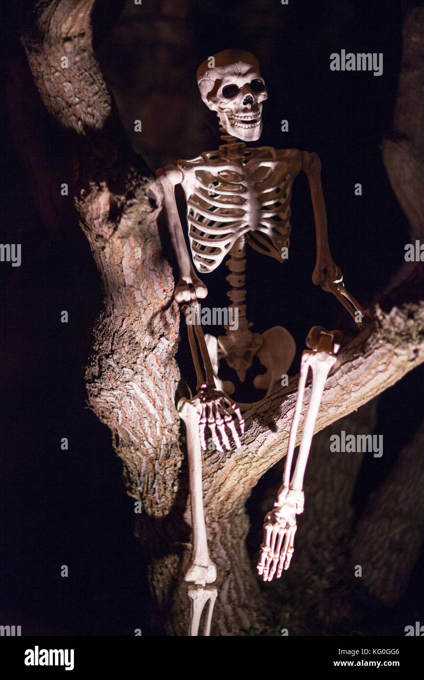 Scary Halloween human skeleton decoration sitting in a haunted tree with spooky lights Stock Photo