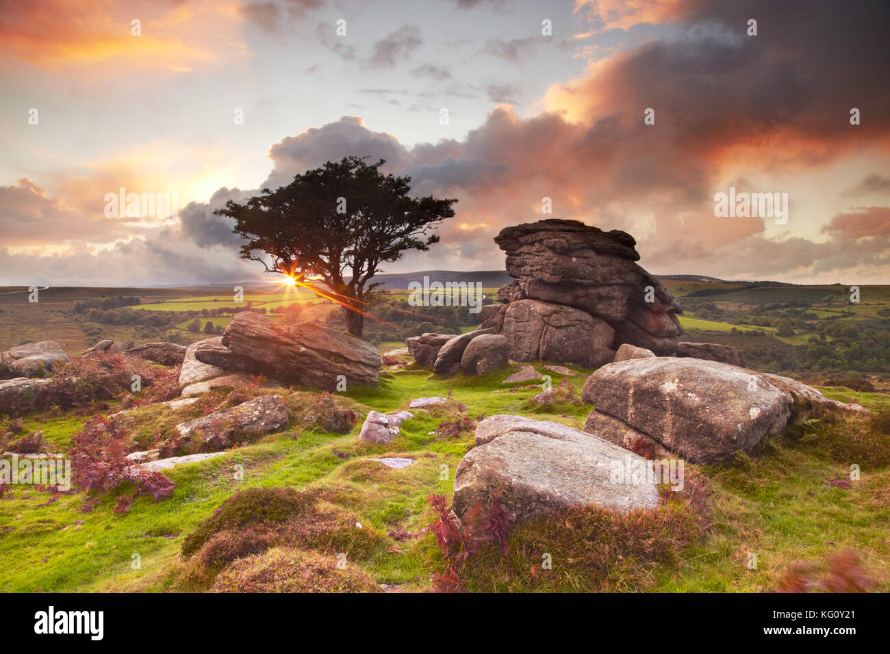 The setting sun is flaring through the branches of a hawthorn tree near Saddle Tor  in Dartmoor National Park, Devon, - Stock Image