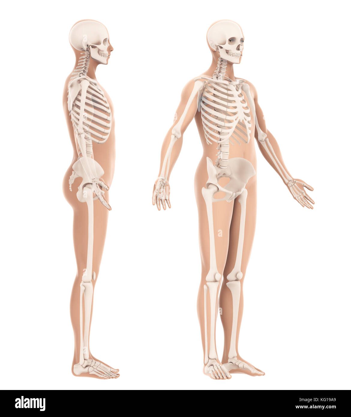 Human Spine Bone Man Side View Stock Photos Human Spine Bone Man