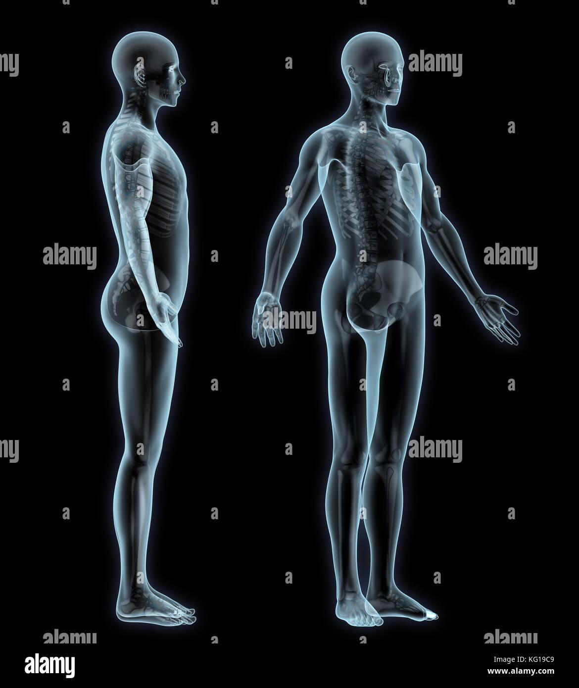 Human Spine Bone Man Side View Stock Photos Human Spine Bone Man