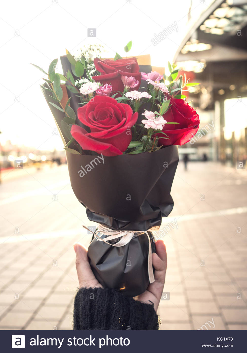 Red roses in hand - Stock Image