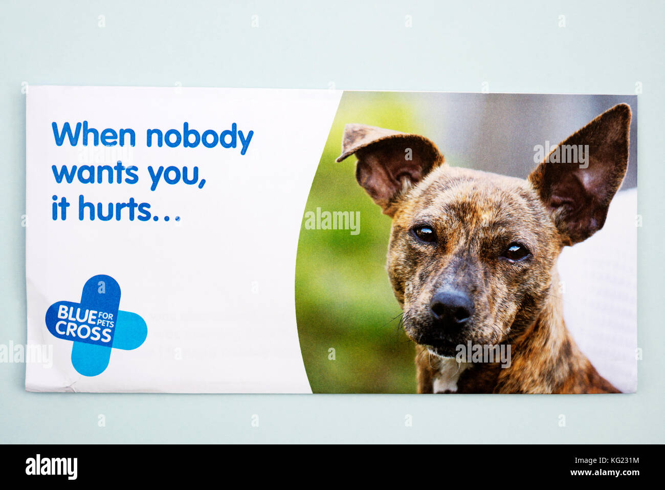 Blue Cross animal charity donation envelope - Stock Image