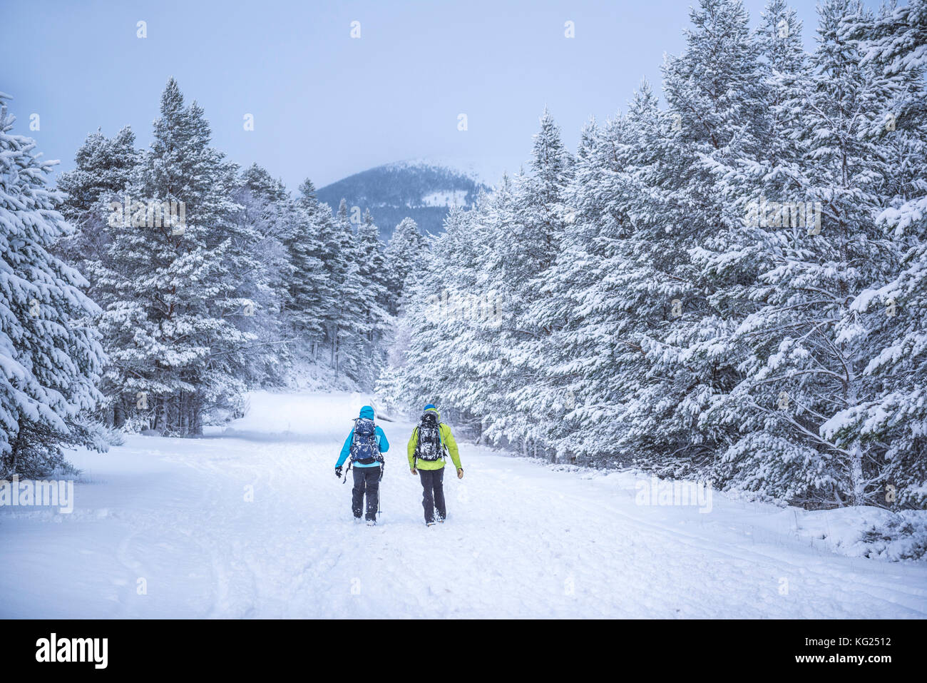 Hiking at CairnGorm Mountain, Glenmore, Cairngorms National Park, Scotland, United Kingdom, Europe Stock Photo