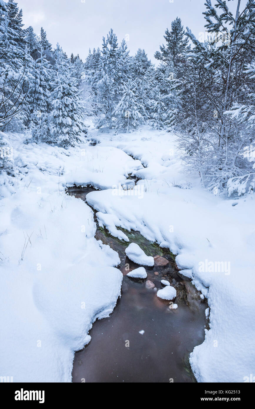 Snowy landscape at CairnGorm Mountain, Cairngorms National Park, Scotland, United Kingdom, Europe - Stock Image