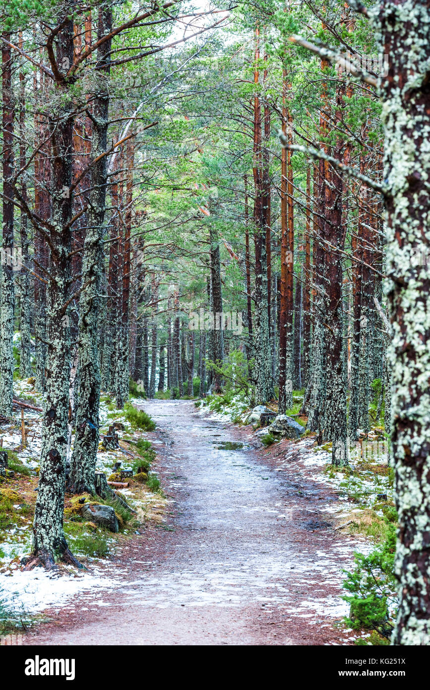Rothiemurchus Forest at Loch an Eilein, Aviemore, Cairngorms National Park, Scotland, United Kingdom, Europe - Stock Image