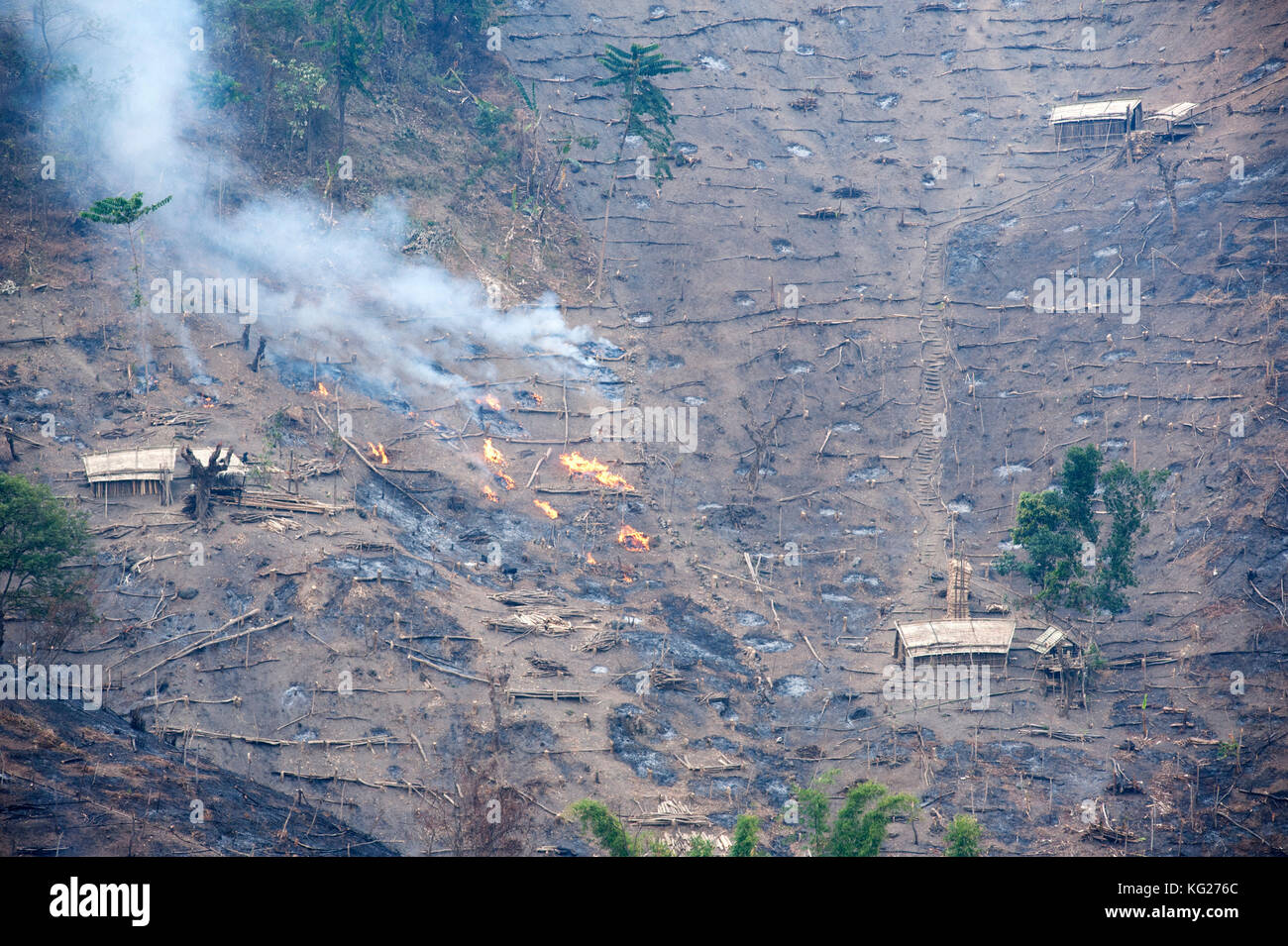 Workers' huts on Naga hillside being desecrated by the government slash and burn system to improve soil for - Stock Image