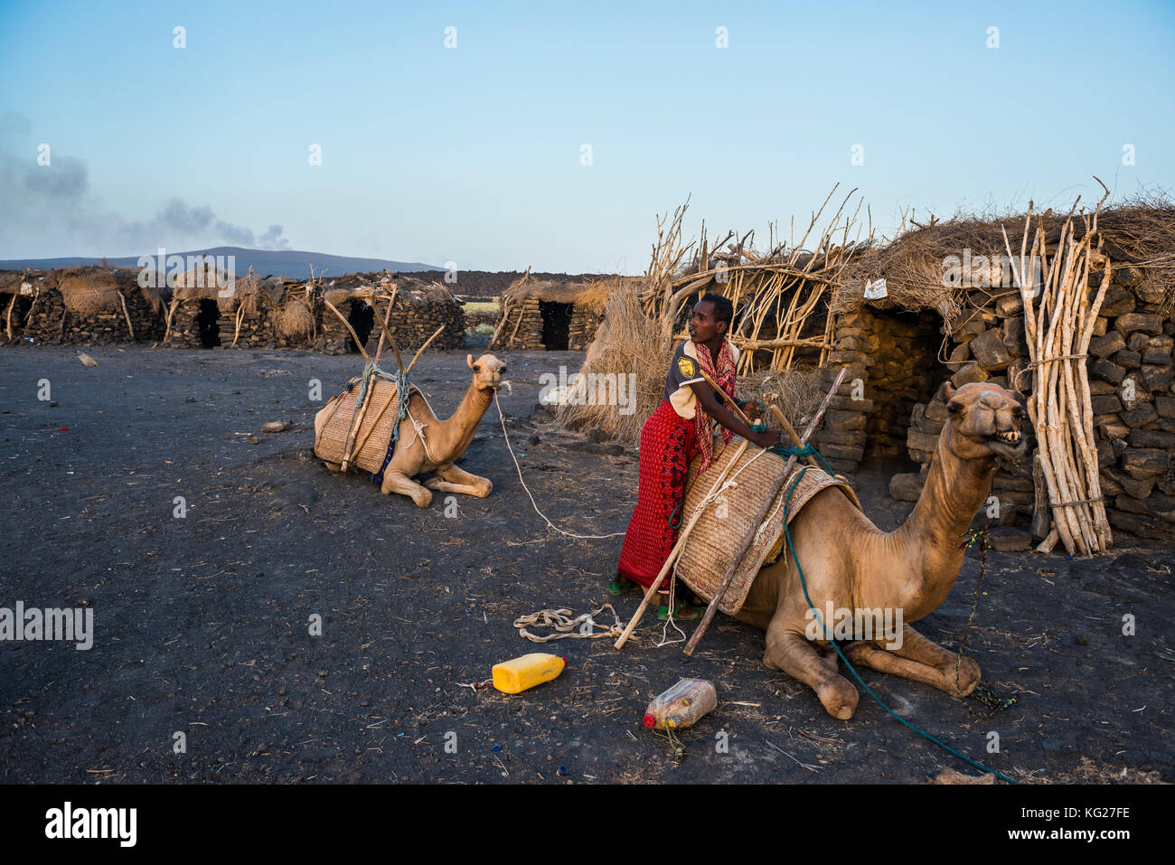 Afar man loading a camel in a camp on the foot of Erta Ale, Danakil depression, Ethiopia, Africa - Stock Image