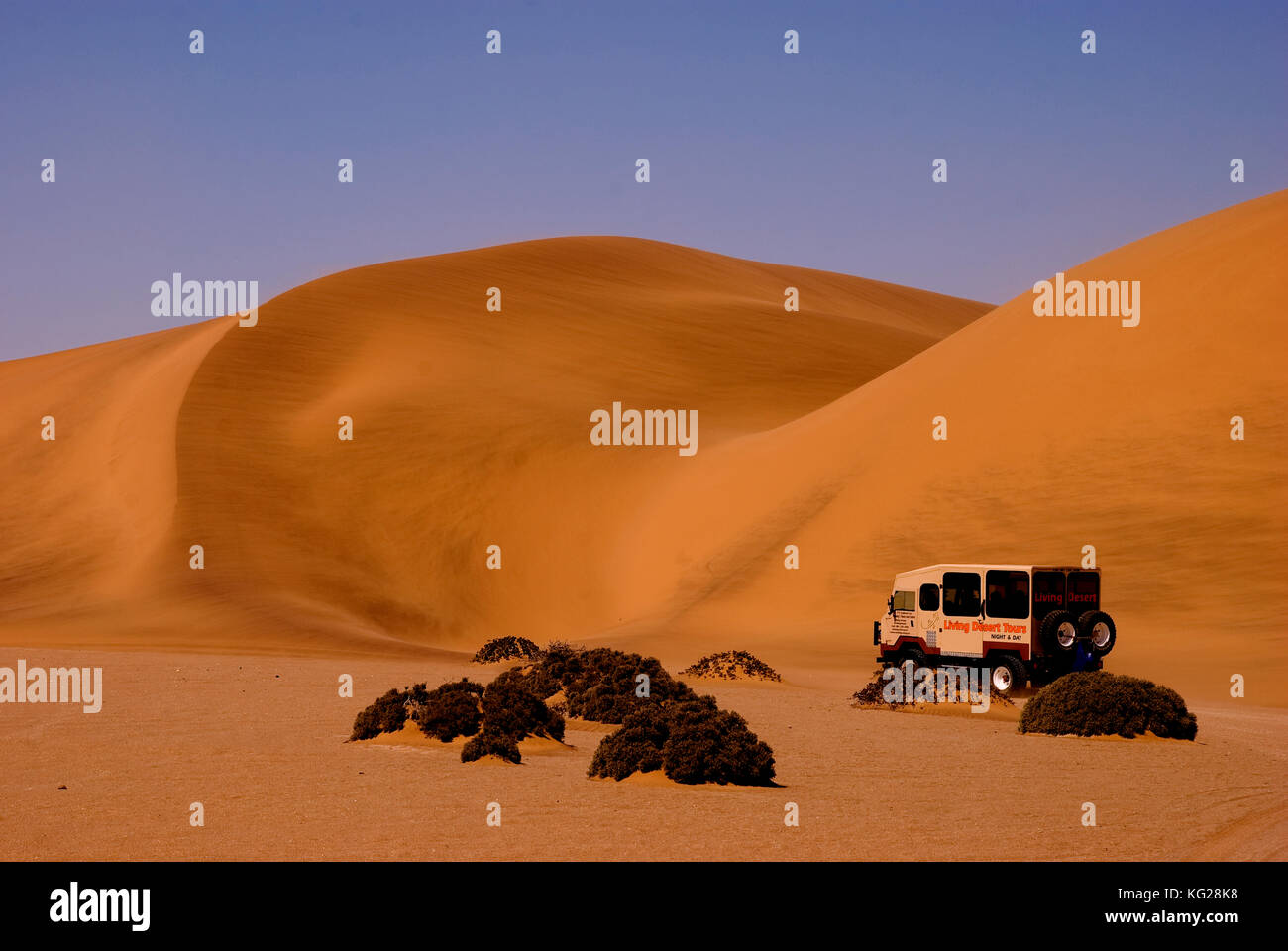 Desert tour at the red dunes near Swakopmund, Namib Naukluft National park, Namibia - Stock Image