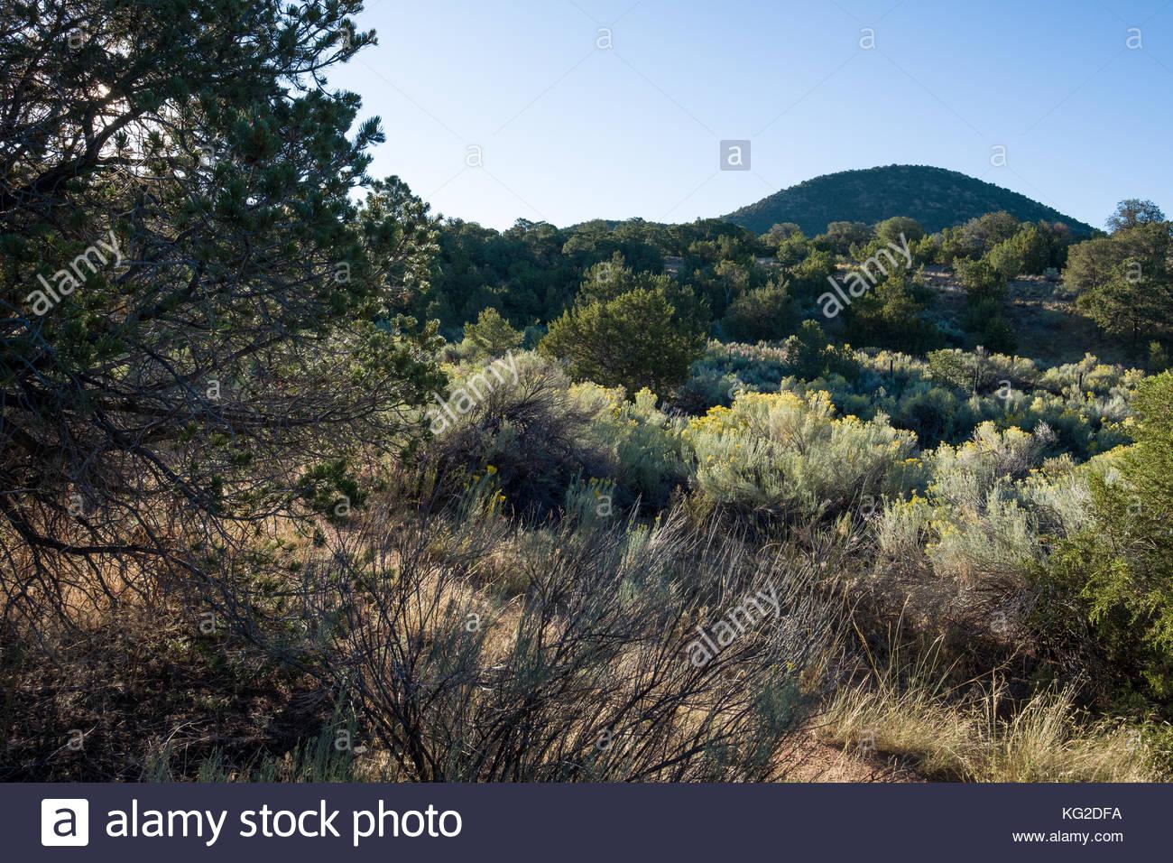 Arroyo with Rabbitbrush and pines, Santa Fe, Santa Fe County, New Mexico, USA - Stock Image