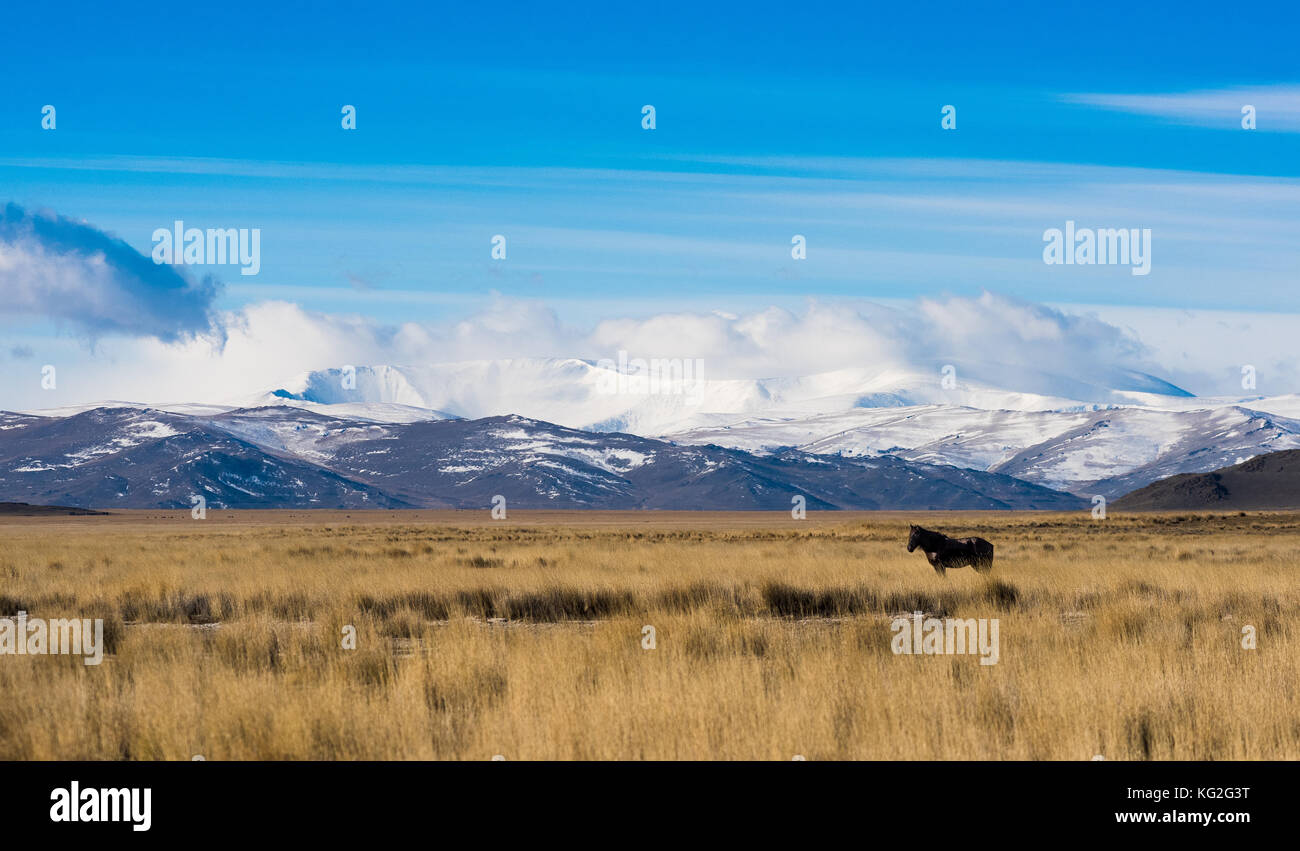 Panorama of the Kurai steppe in the autumn against the backdrop of towering snow peaks. Russia, Siberia, the Republic - Stock Image