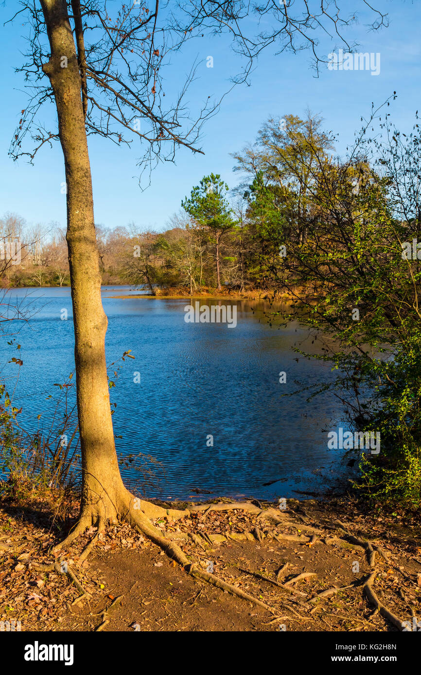 The tree on the shore of Candler Lake in the Lullwater Park in sunny autumn day, Atlanta, USA Stock Photo