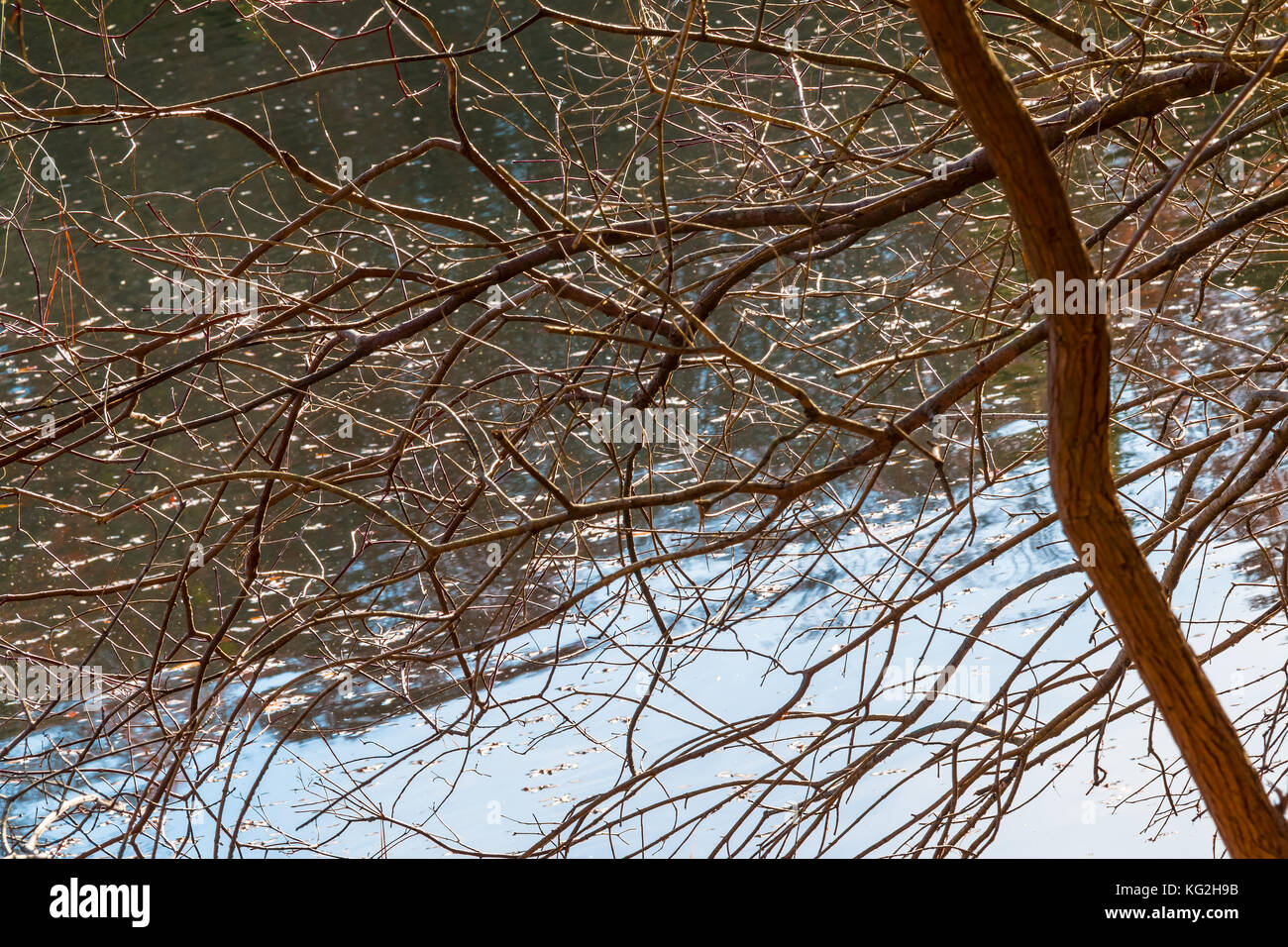 The bare branches and the tree trunk on the background of lake Stock Photo