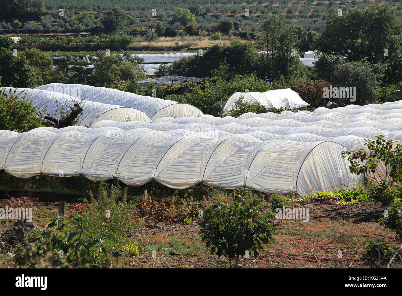 Polytunnels Stock Photos Amp Polytunnels Stock Images Alamy