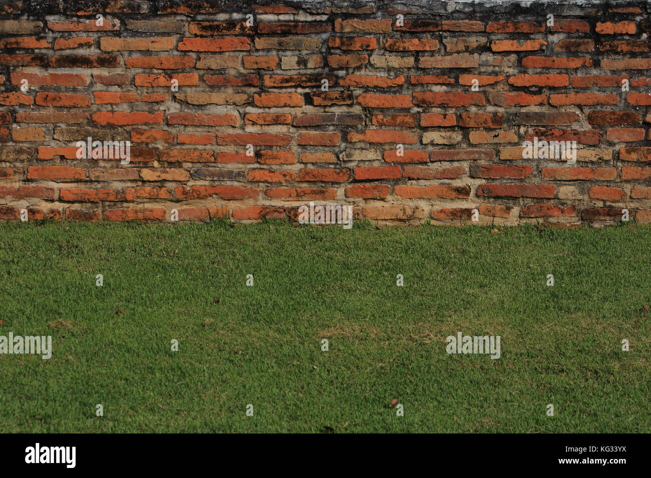 Old brick wall green grass material in a background image. - Stock Image