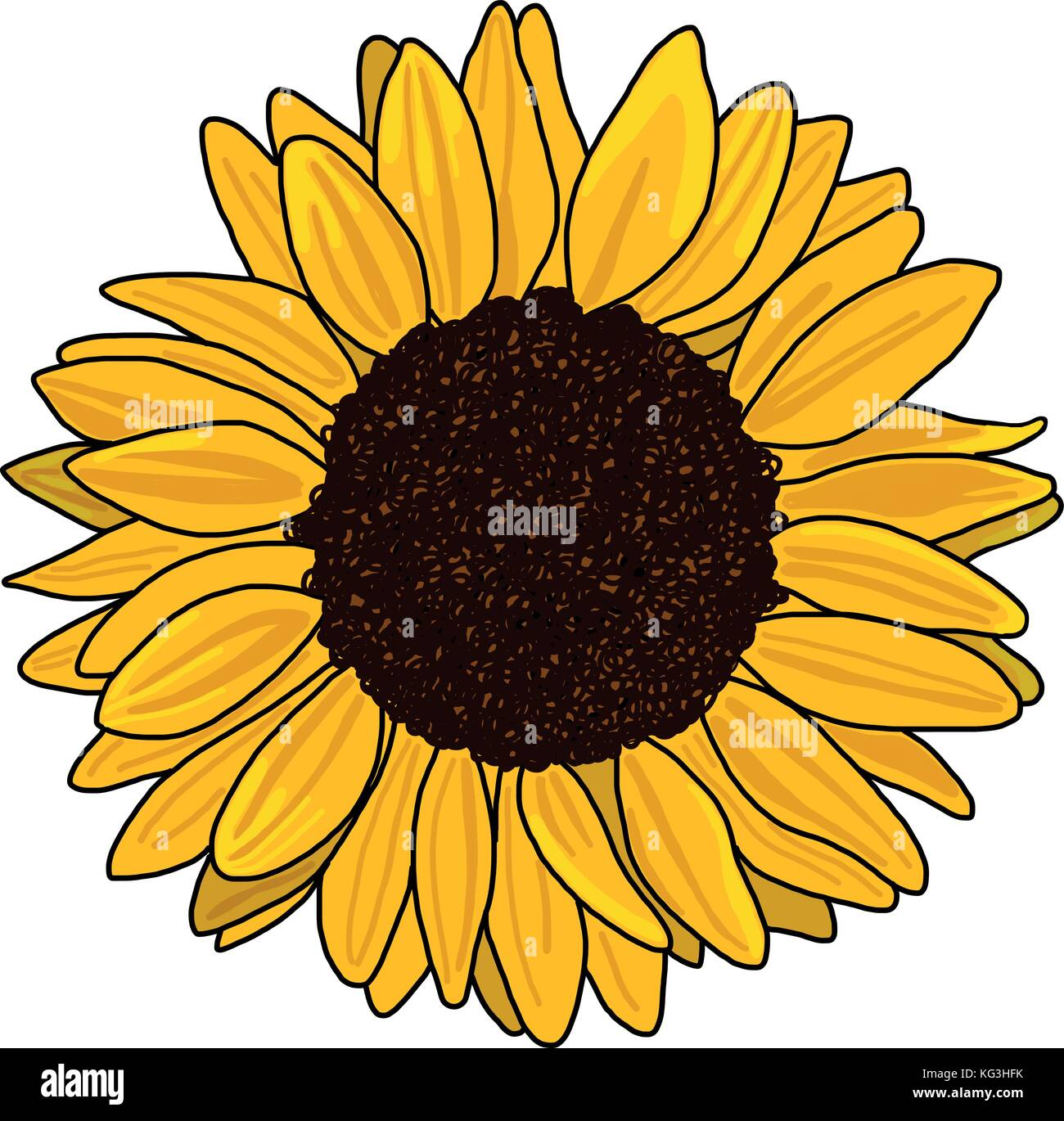 Sunflower vector isolated on a white background Stock ...