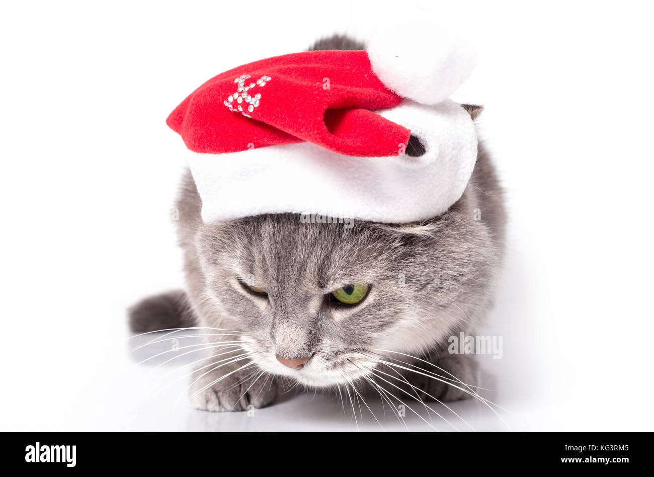 Sad angry cat in Santa Claus's cap. The gray cat in a red New Year's hat has low sat down and has blinked - Stock Image