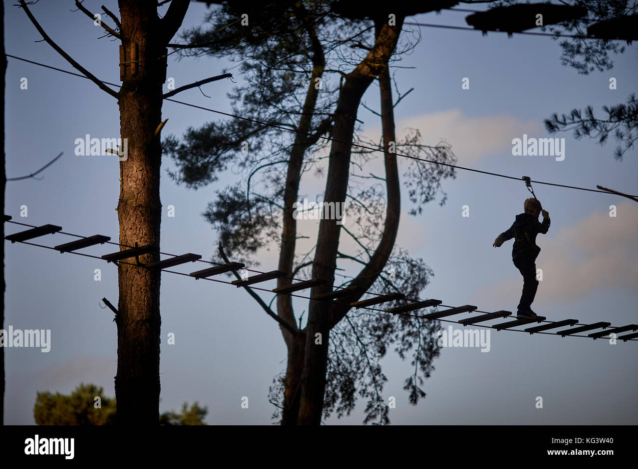 GoApe at Forestry Commission managed Delamere Forest Park  large wood near Frodsham, Cheshire, England. - Stock Image