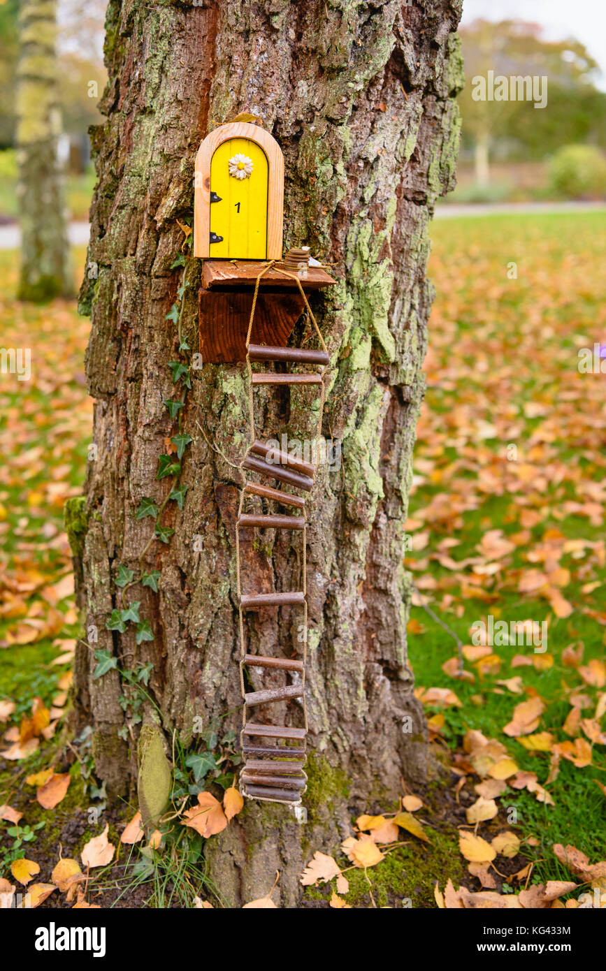 Fairy doors on trees in an Irish wood for the little people