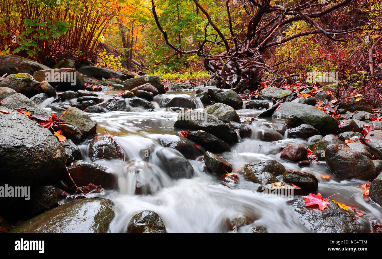 Small waterfalls running over rocks through forest in Moore Park Ravine in autumn. Mud Creek is part of Don River - Stock Image