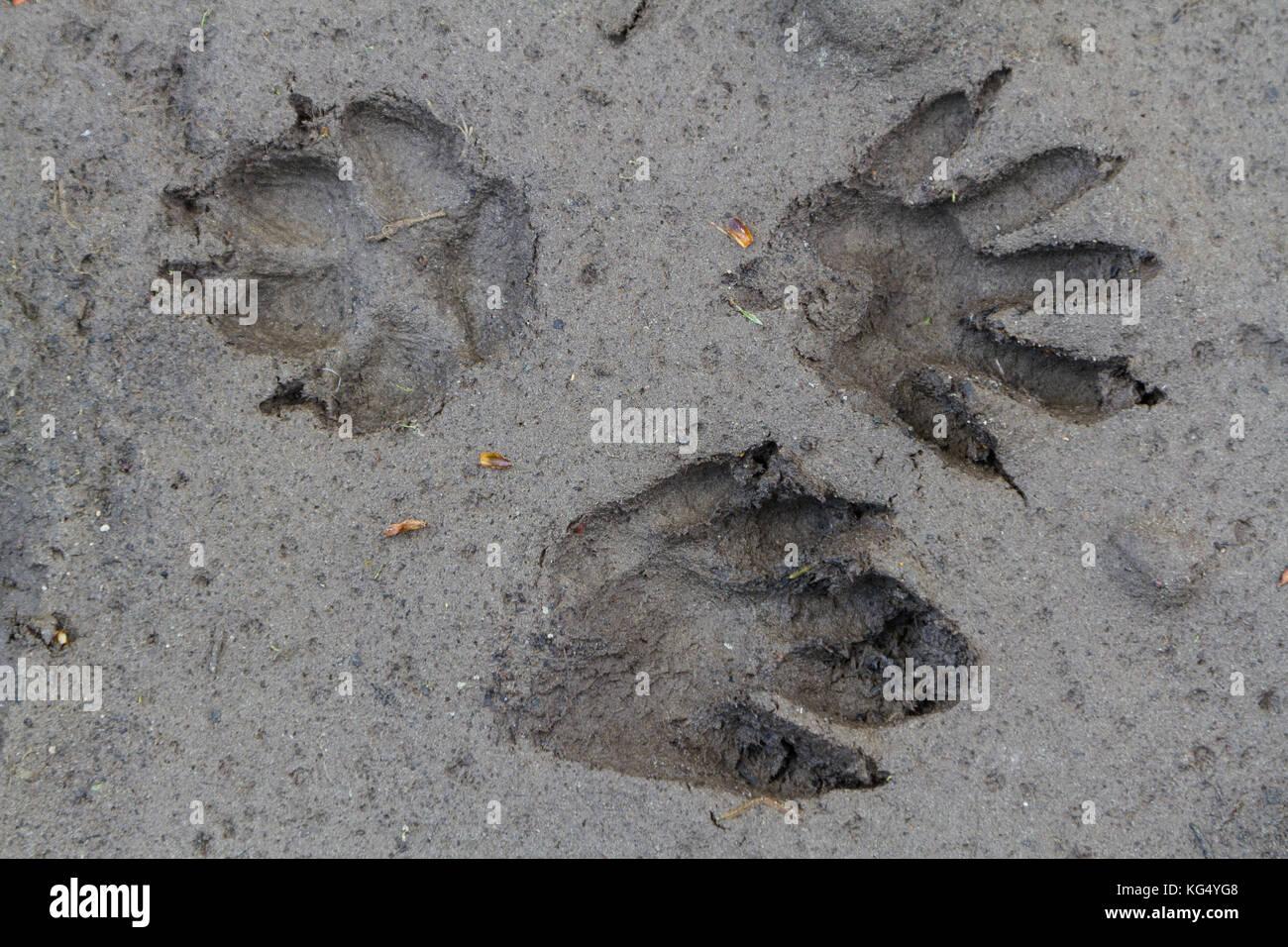 Tierfährten Stock Photo