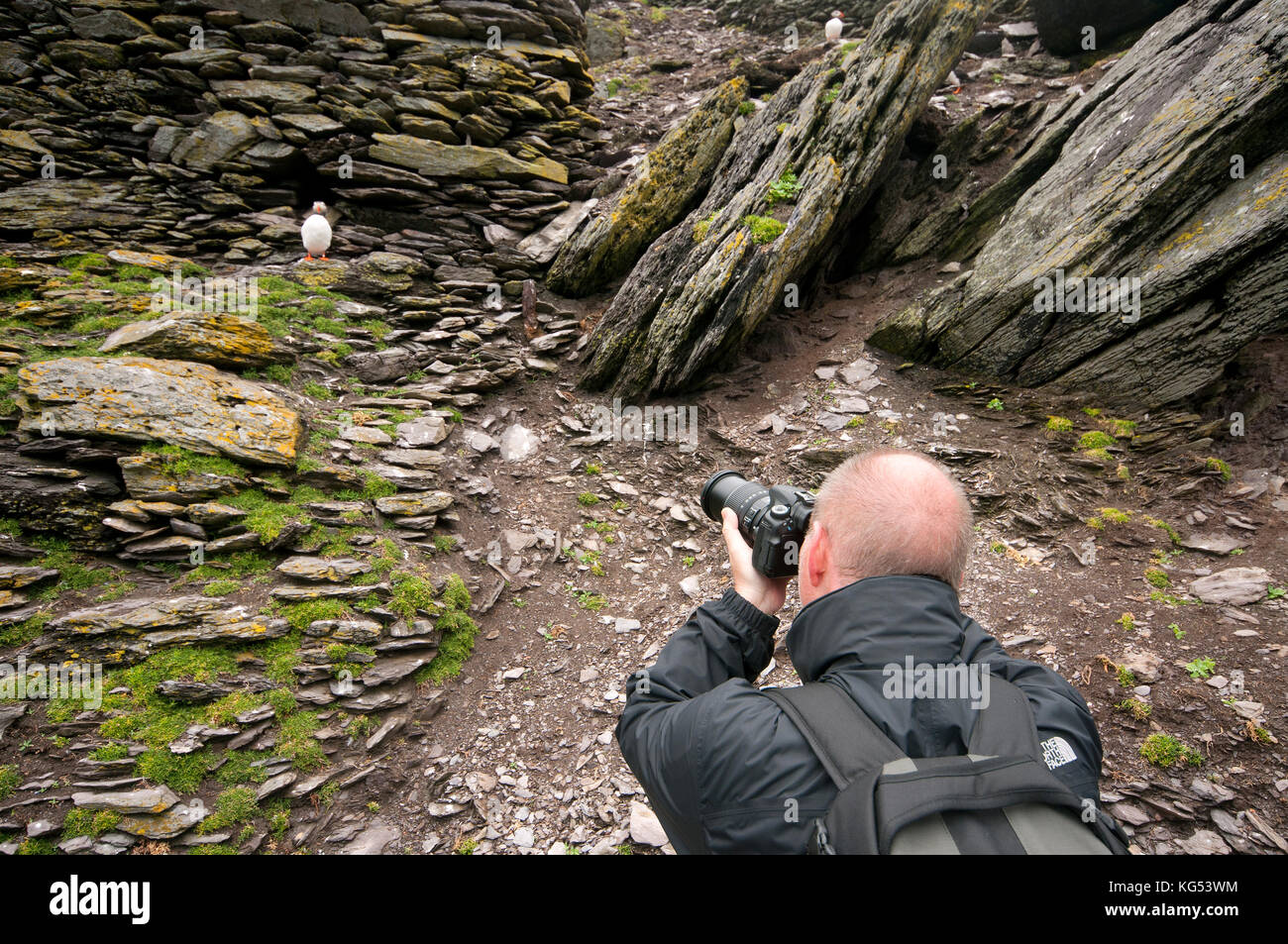 Tourist photographing puffin (Fratercula arctica) at Skellig Michael Island, County Kerry, Ireland - Stock Image