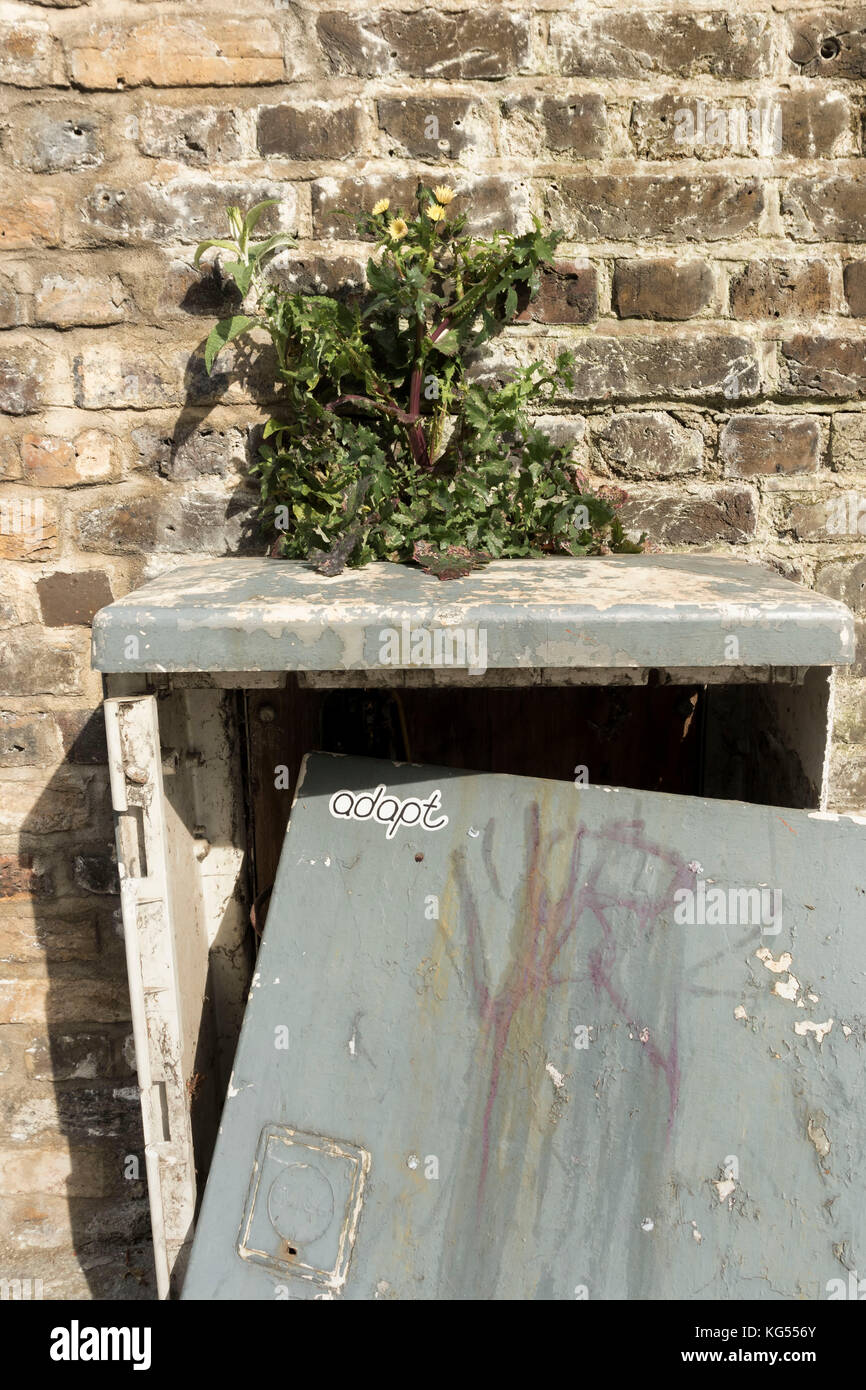 Plant growing out of utility box against brick wall - Stock Image