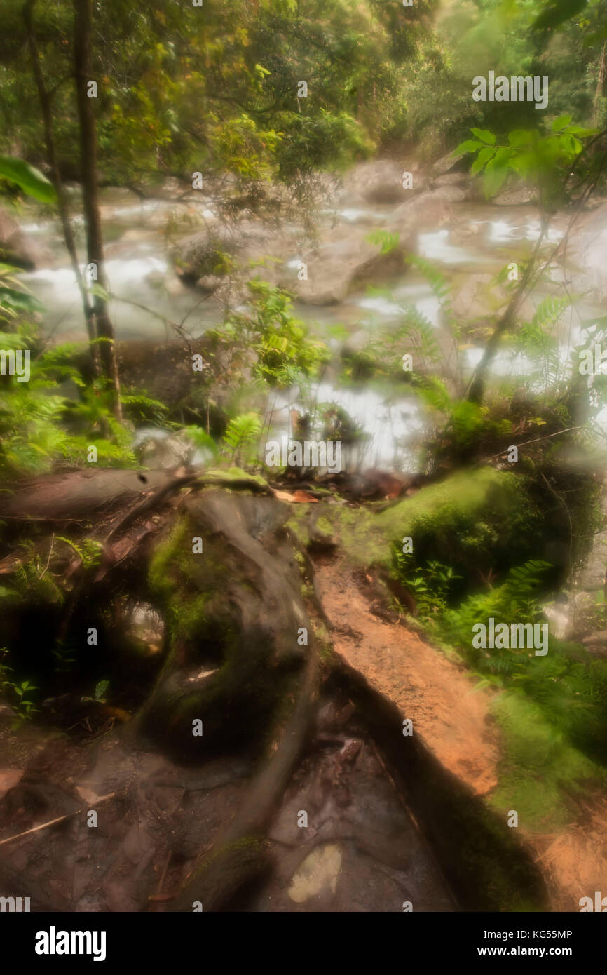 Falling tree with raging stream and woods in background, mossman gorge, Cairns, Australia - Stock Image