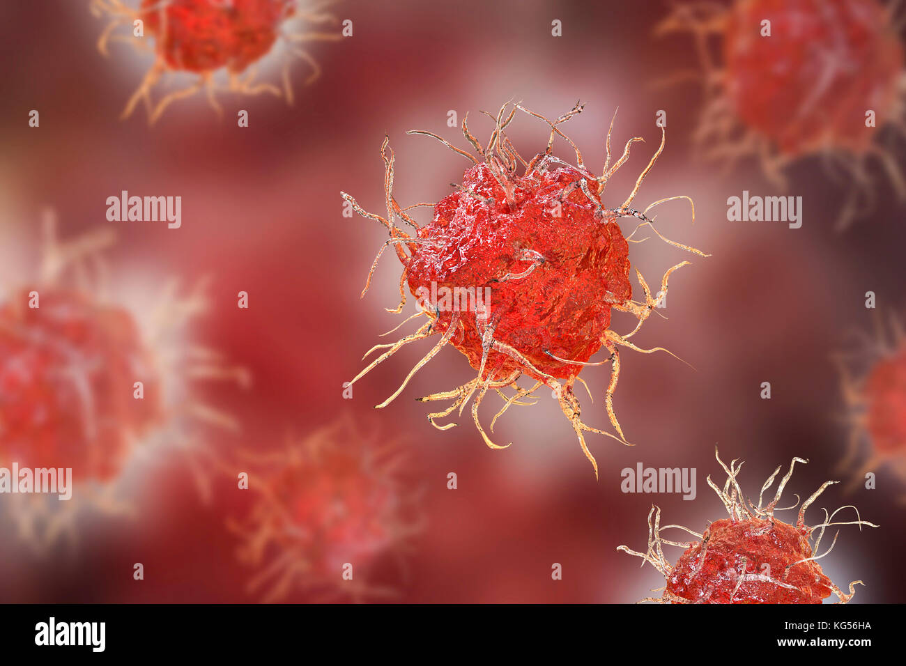 Dendritic cells, computer illustration. Dendritic cells, a type of white blood cell, are a type of antigen presenting - Stock Image