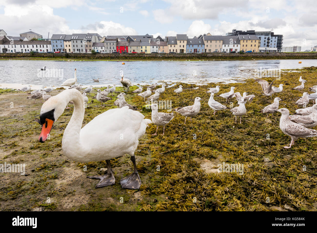 Landascapes of Ireland. Galway city and Corrib river - Stock Image