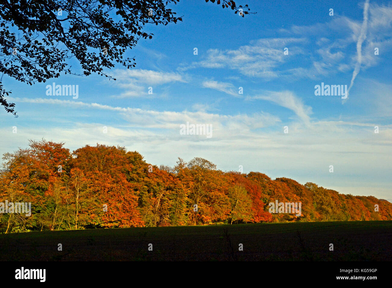 A walk on The Ridgeway Path to Whiteleaf Hill and Whiteleaf Woods. Autumn, Chilterns, UK - Stock Image