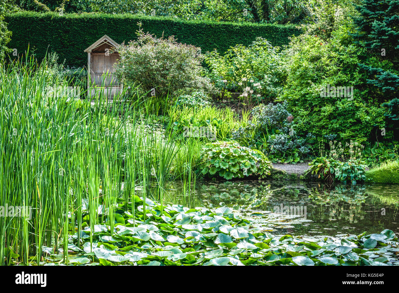 Waterlily pond at Ness Gardens in Neston, Cheshire - Stock Image