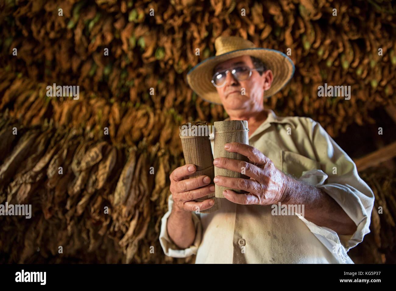 Cuba, Republic of Cuba, Central America, Caribbean Island. Havana district. Tobacco farm in Pinal dal Rio, man at - Stock Image