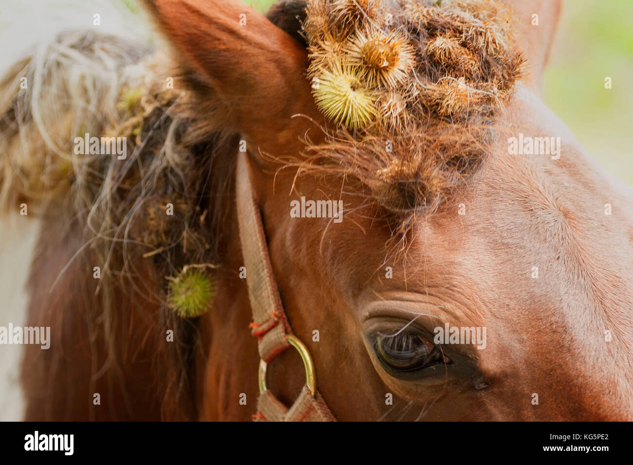 Brown horses eye and mane, Croydon, England, United Kingdom - Stock Image