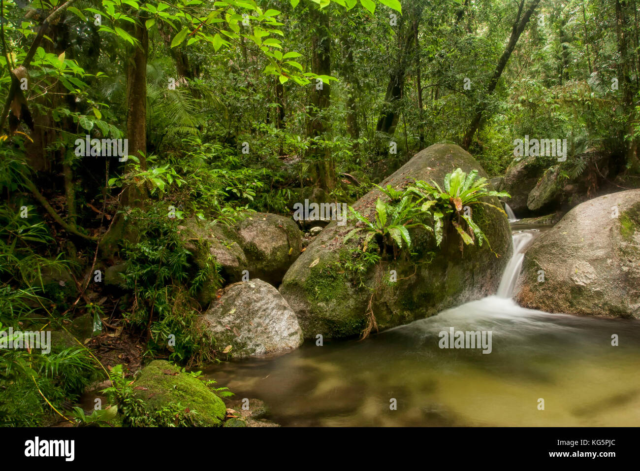 ferns on rock in woodland river, Daintree, Cairns, Australia Stock Photo