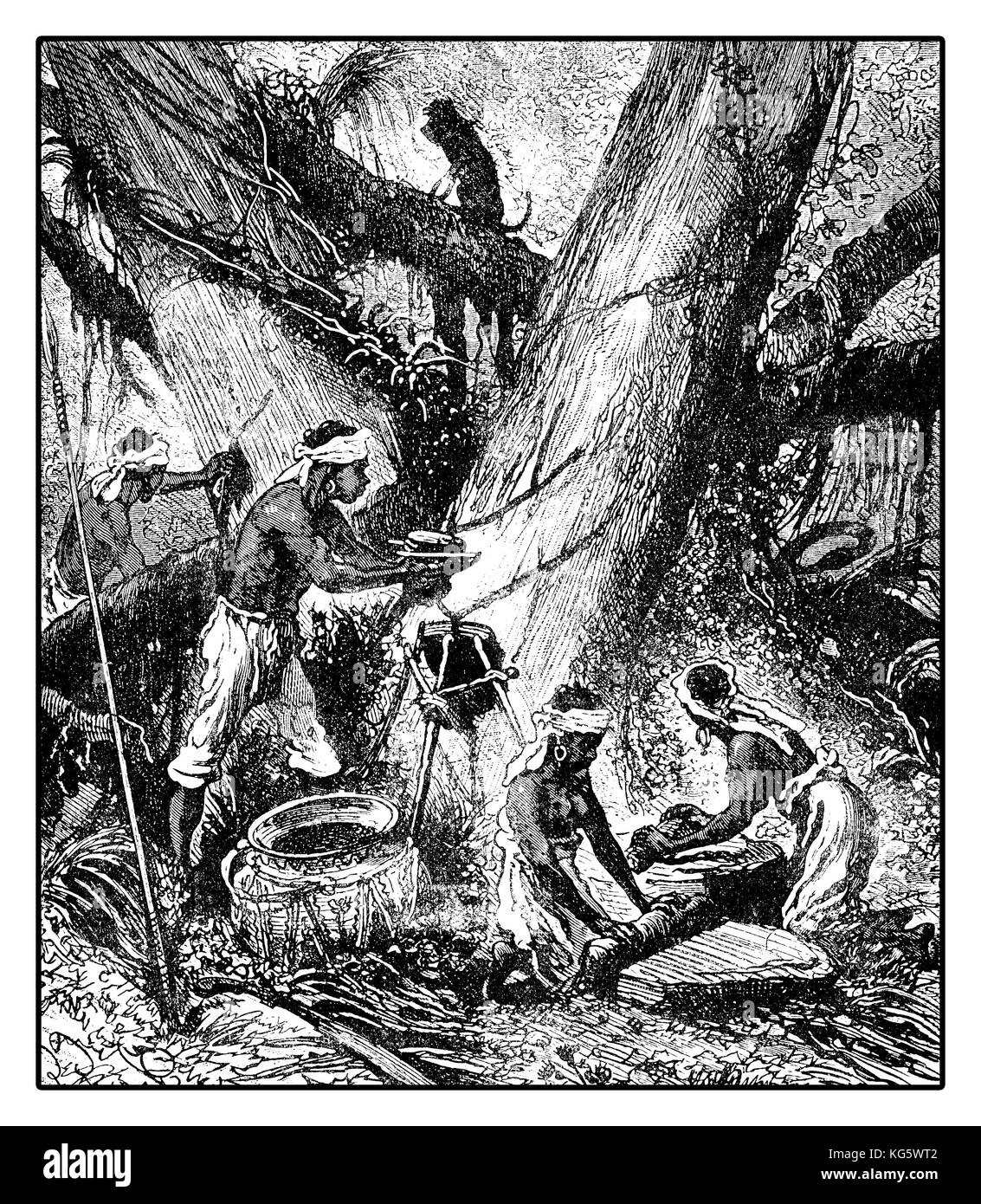 XIX century illustration of latex harvesting  from palaquium tree for gutta-percha production with incisions on - Stock Image