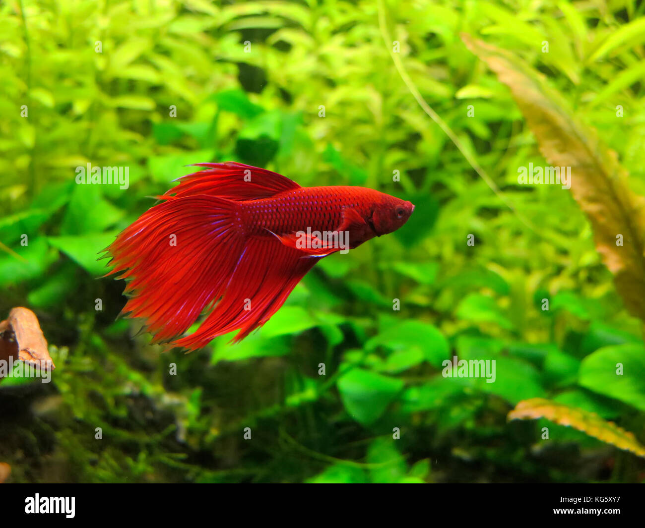 Freshwater Underwater Scene Freshwater Fish Stock Photos ...