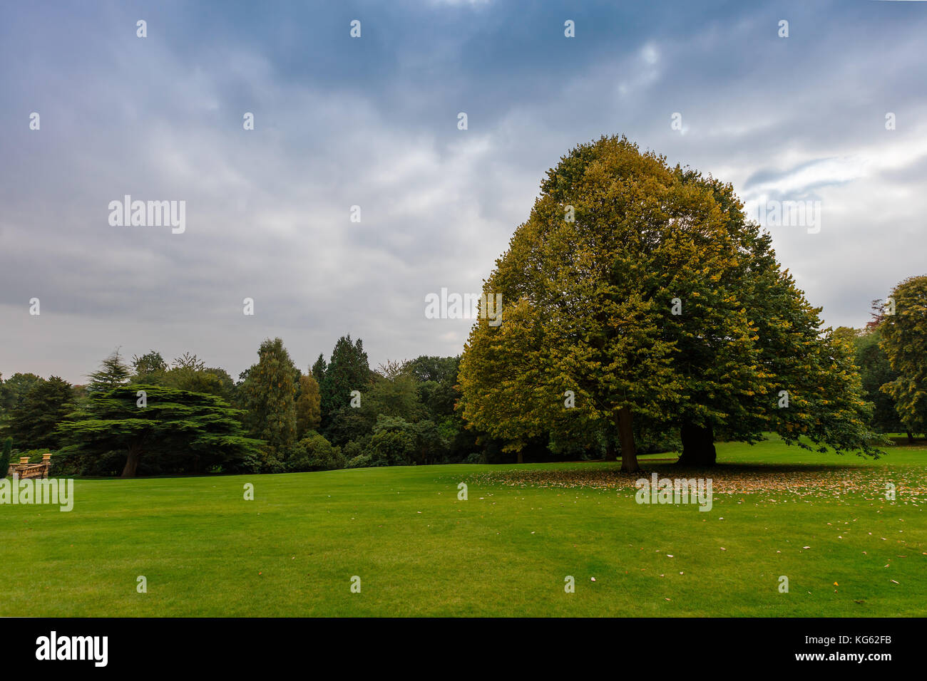 Landscaped park with large trees and lawn in early autumn. - Stock Image