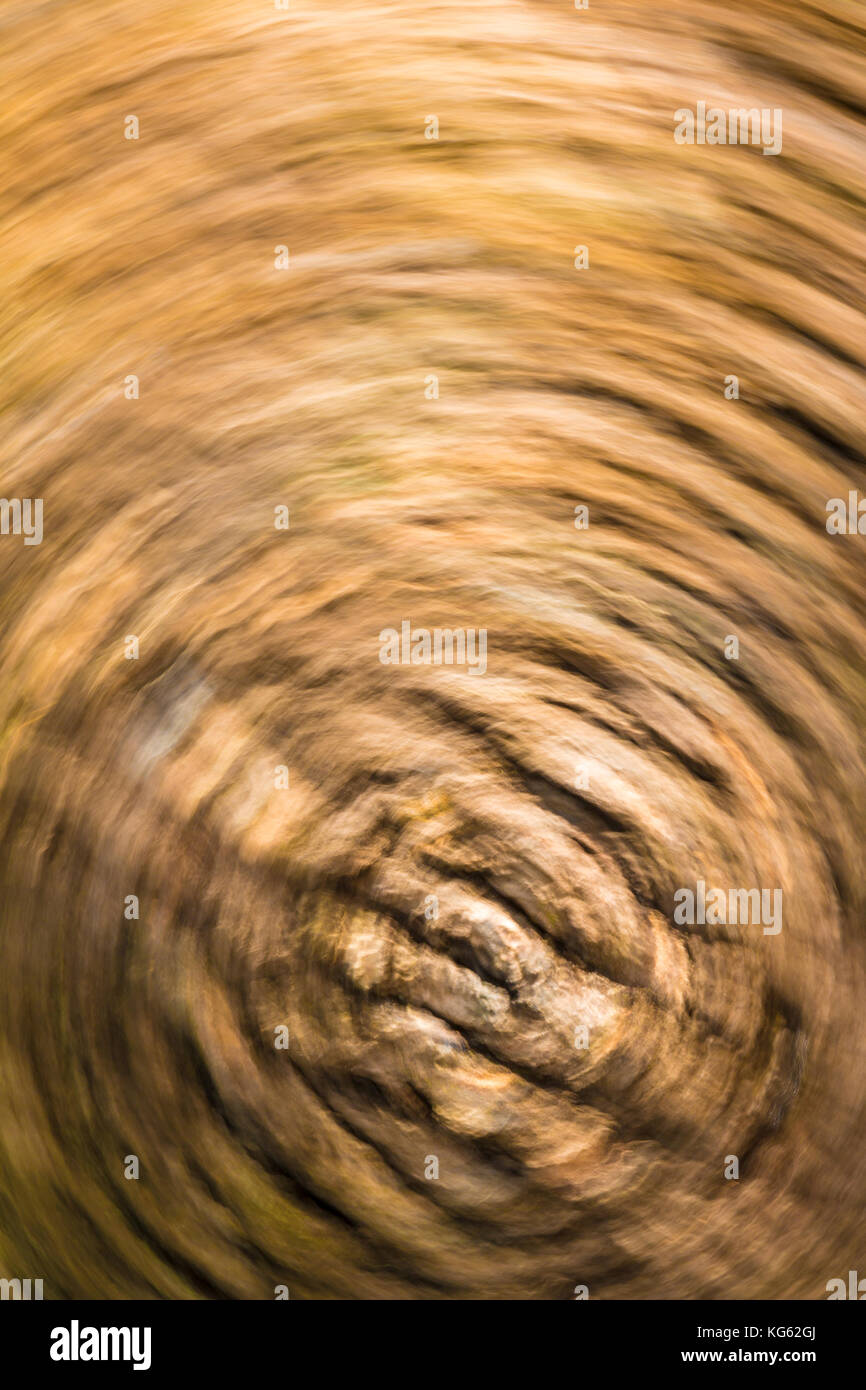 Abstract nature background of bark of tree trunk in motion blur - Stock Image