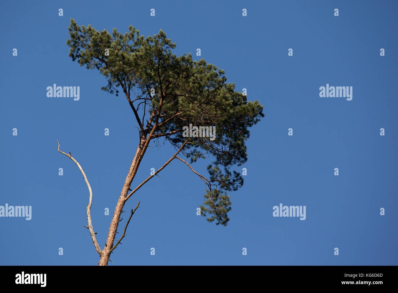 freigestellte Baumkrone - Stock Image