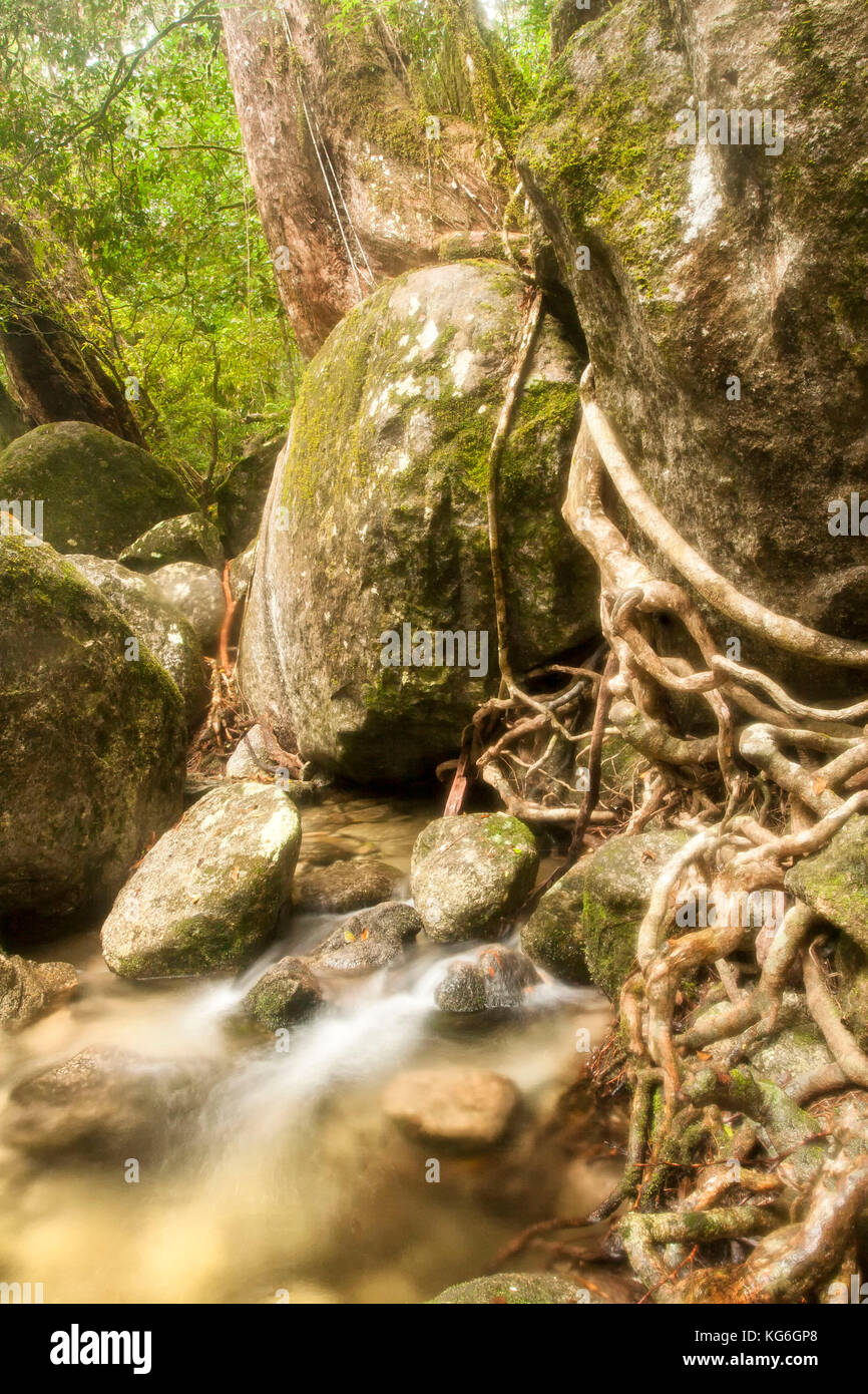 large moss covered rock in woodland stream Stock Photo