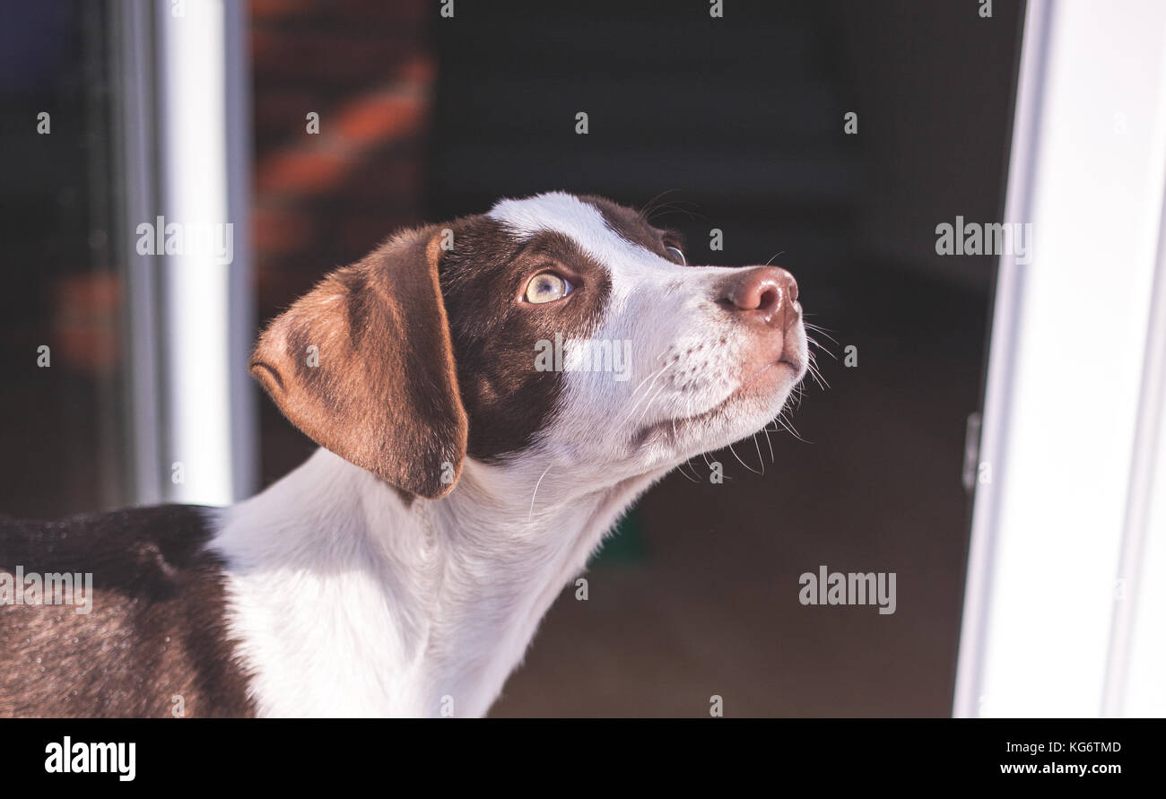 Stray dog, saved from the streets, found himself a new home - Stock Image
