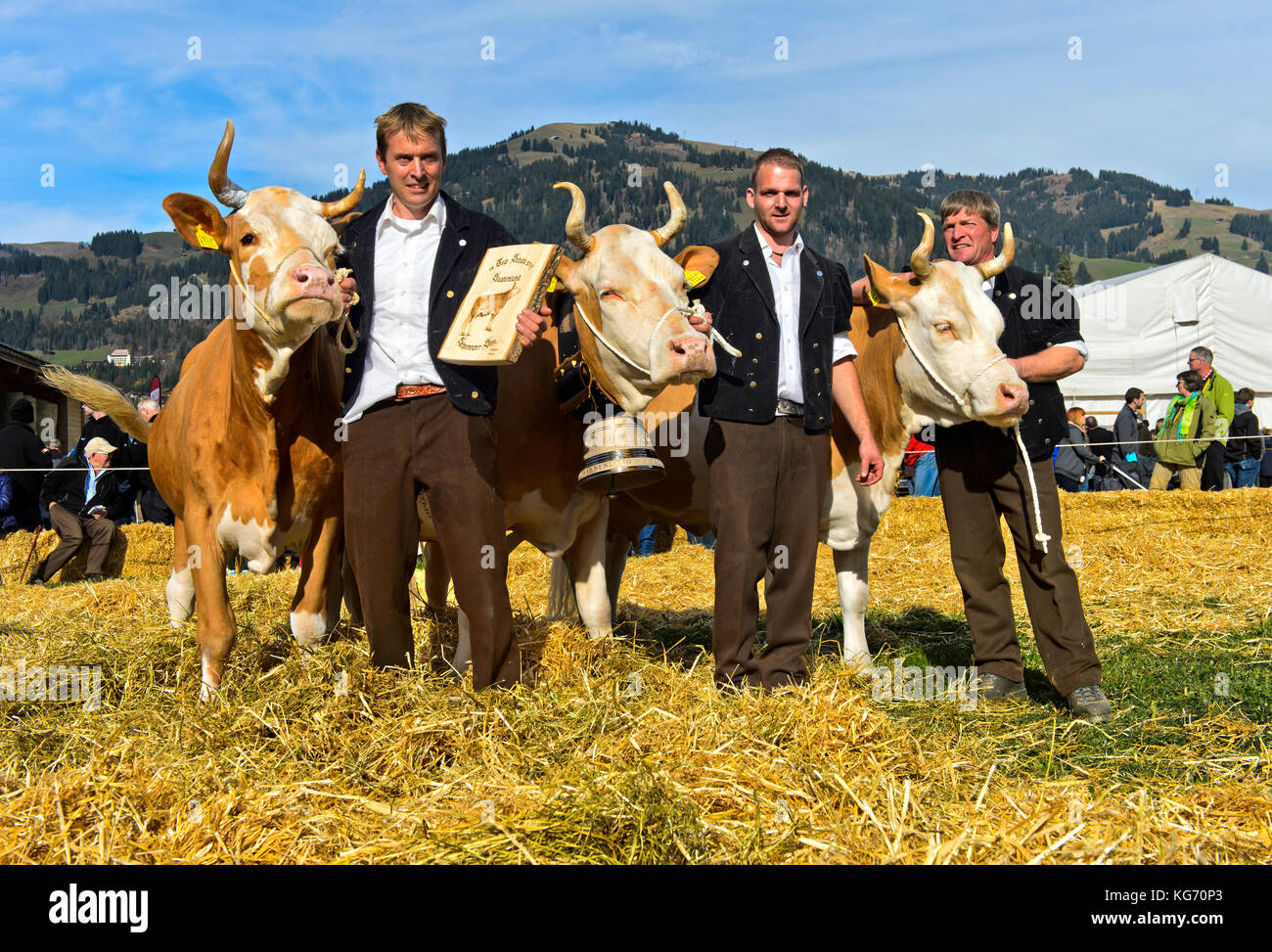The winning Simmental cows at the Miss Simmental beauty contest, SWISSCOW Topschau Saanenland, Gstaad, Switzerland - Stock Image