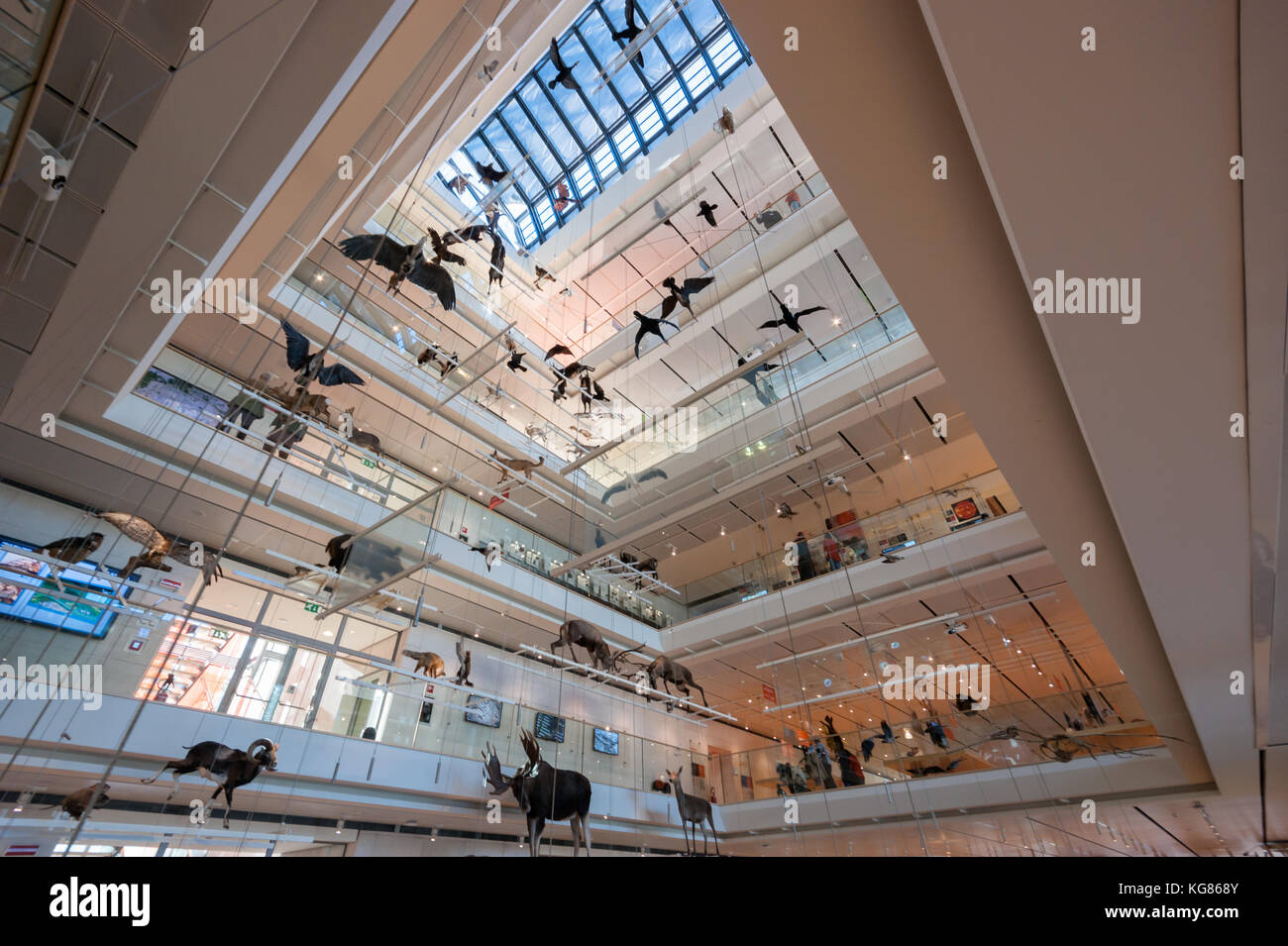Birds models suspended into the Grand Hall of the MUSE Science Museum in Trento, Italy, designed in 2013 by Renzo Stock Photo