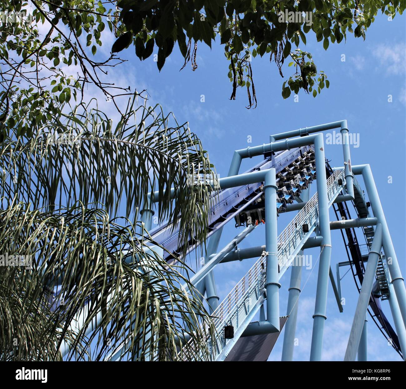 Looking up through the branches of a palm tree at a small section of a blue roller coaster. Only the soles of the - Stock Image