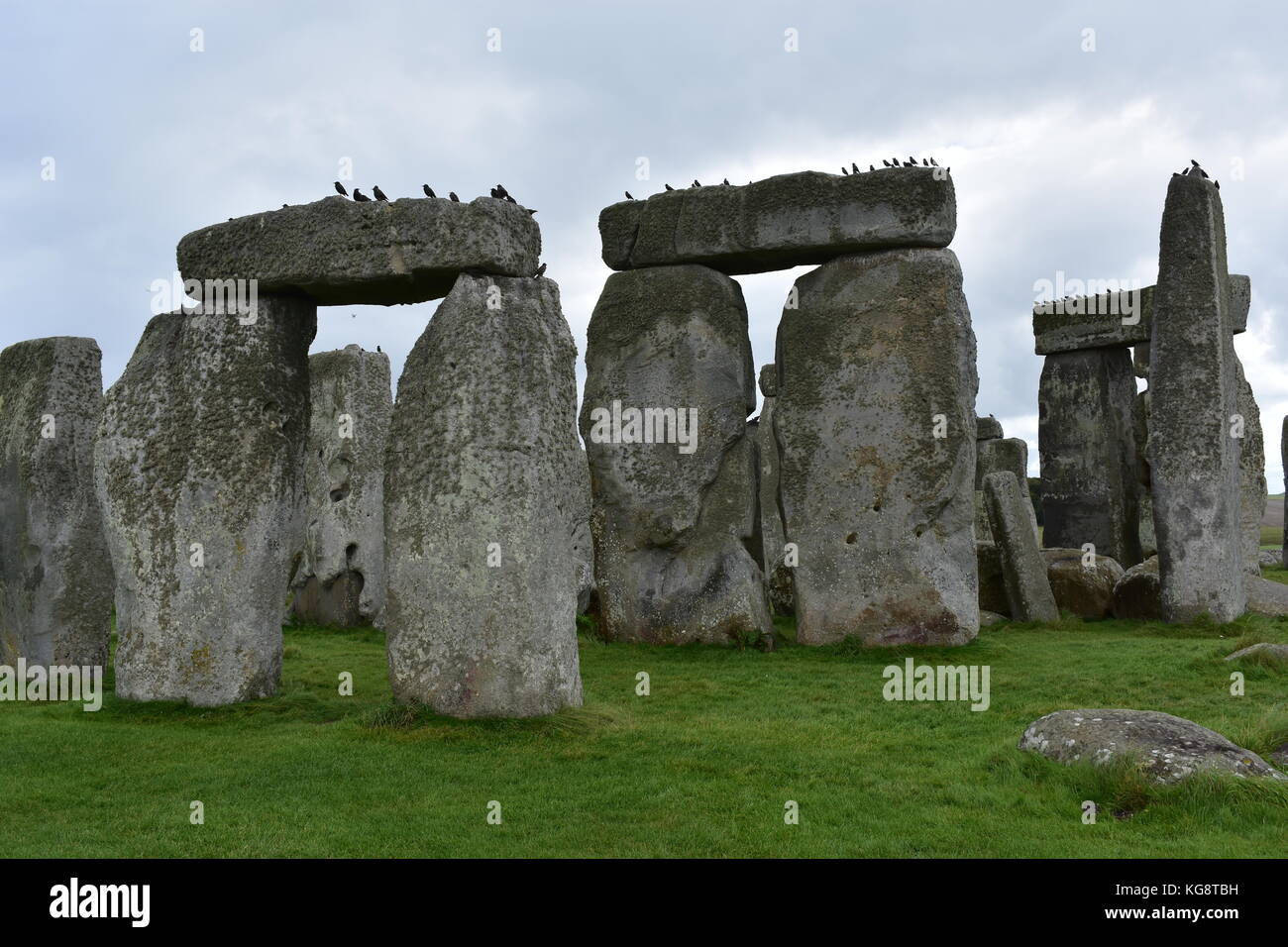Birds on Stonehenge - Stock Image