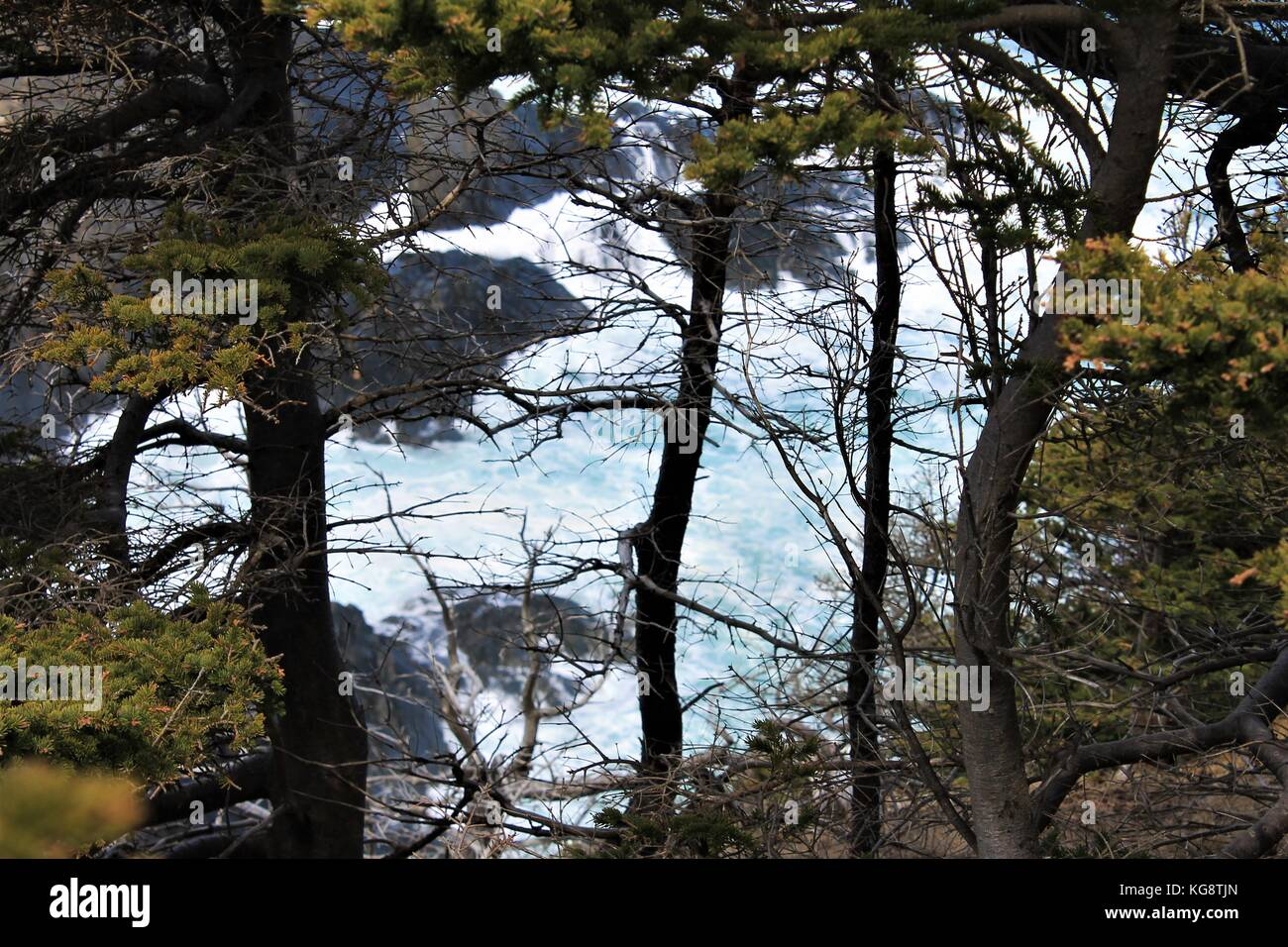 Surf and breaking waves viewed through the trees, Logy Bay-Middle Cove-Outer Cove, Newfoundland and Labrador, Canada. - Stock Image