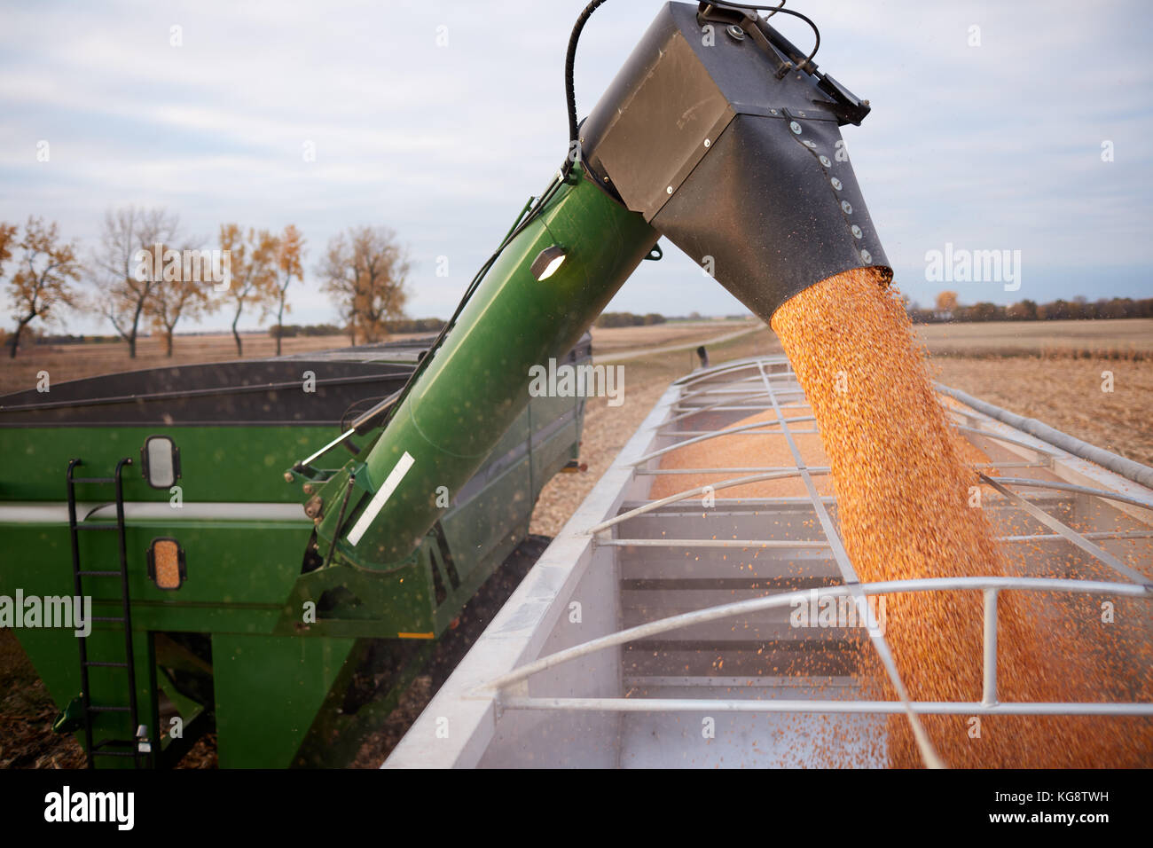 Tractor and trailer hopper filling a semi with newly harvested dried corn kernels using a funnel attachment - Stock Image