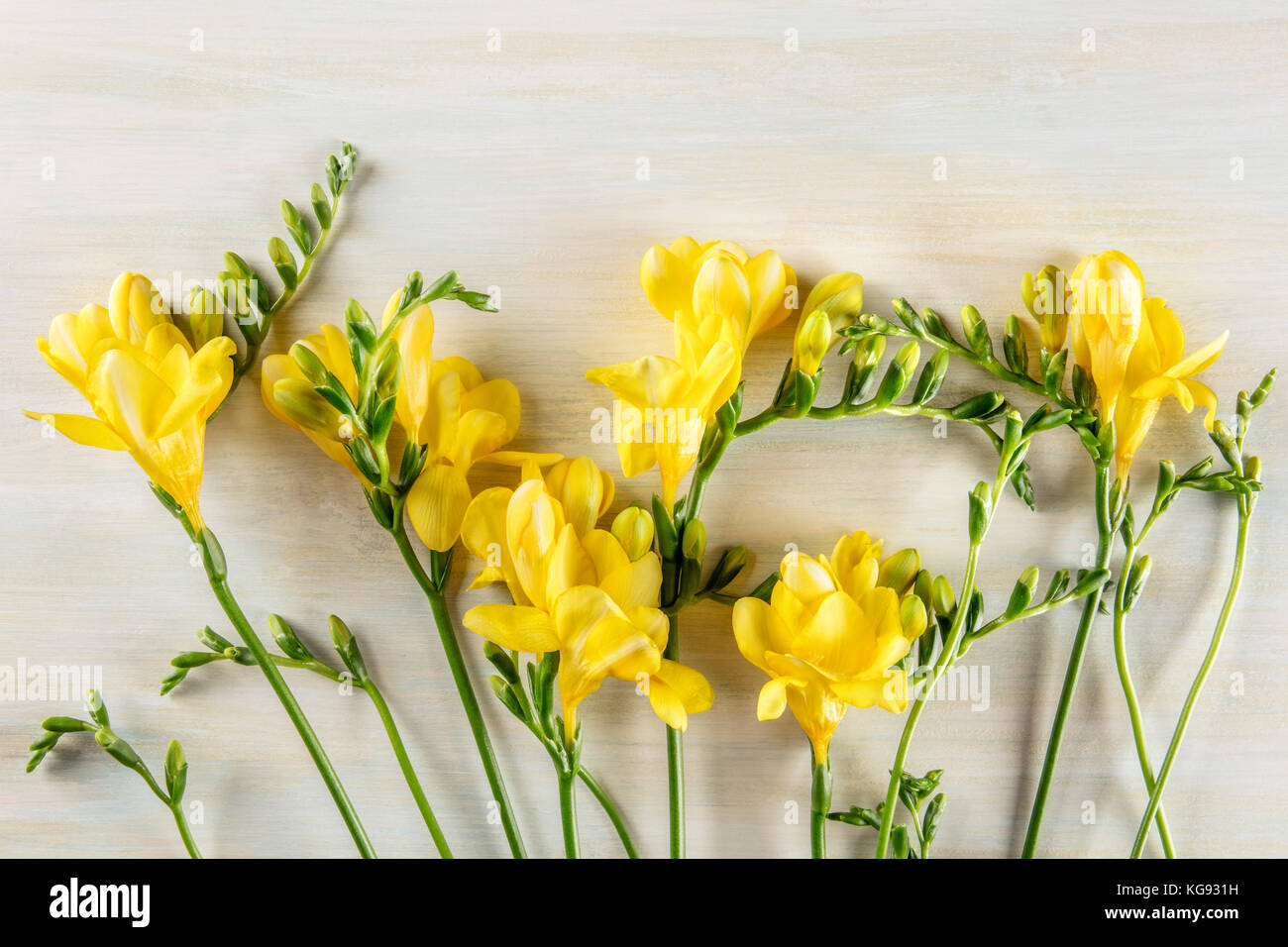 Yellow freesia flowers stock photos yellow freesia flowers stock spring design template with yellow freesia flowers and copy spac stock image izmirmasajfo